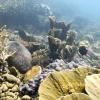 Anak Krakatoa, underwater